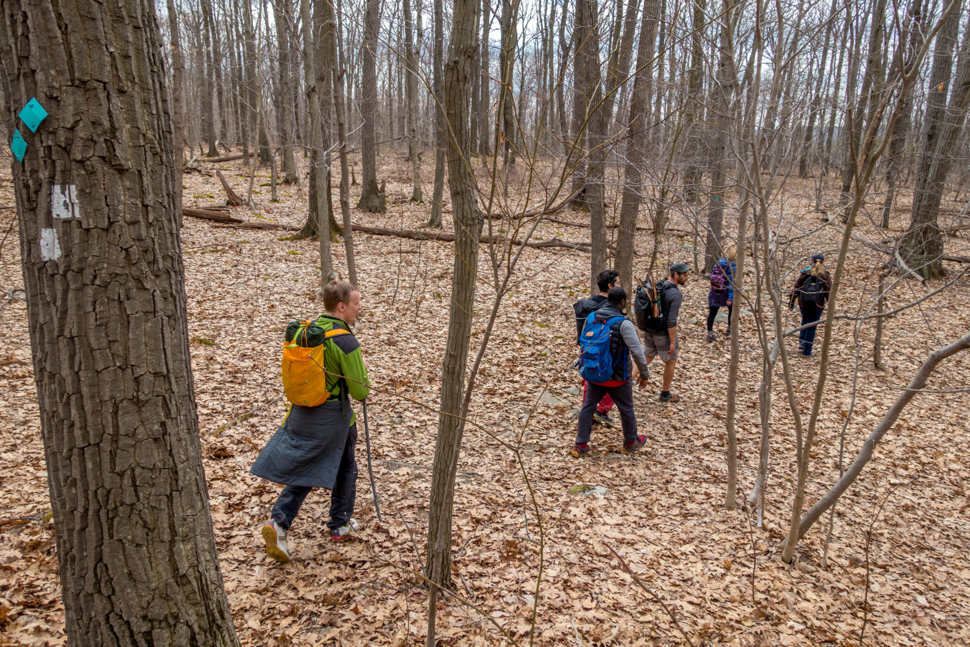 The group hikes through the leaf-littered forest floor
