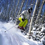 Skier skiing in Alta