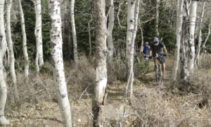 The Whole Enchilada mountain biking trails