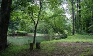 hiking at Laurel Highlands