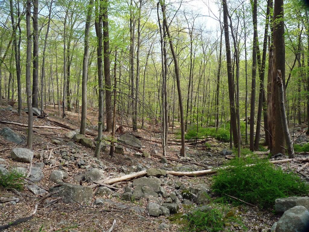 Bear Mountain Park hiking trails