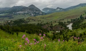 Foreground of Wyoming Wilderness