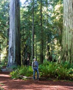 man enjoying hiking in gorgeous redwood park