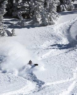 Alta backcountry skiing