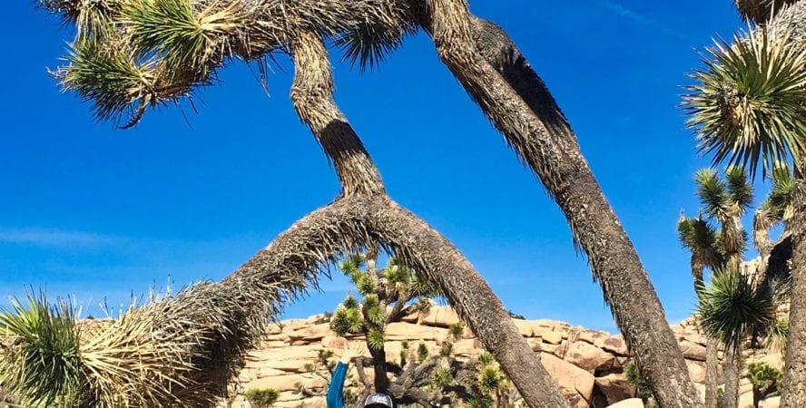 Joshua Tree hiking