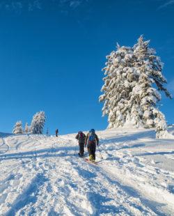 Mount Baker Ski Mountaineering