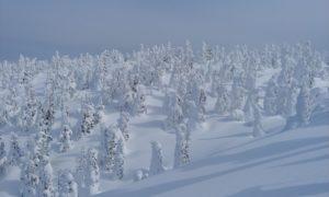 hakkoda-backcountry-skiing