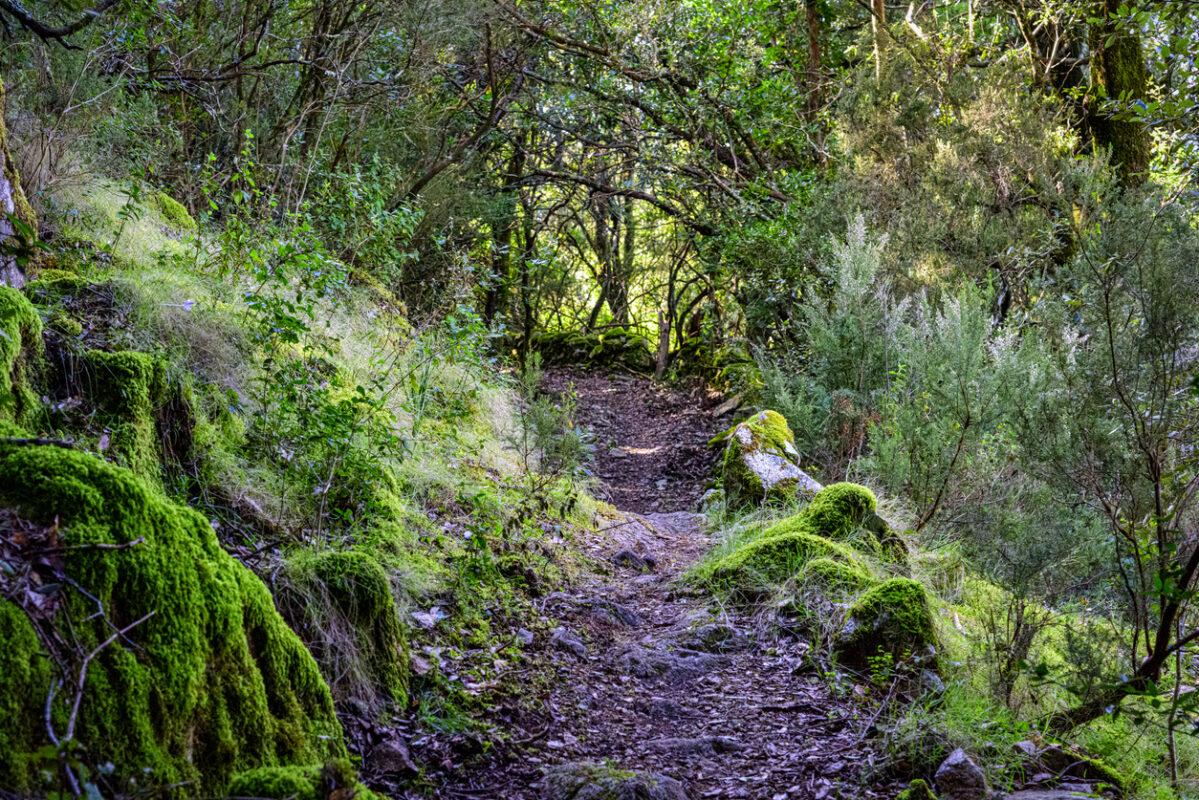Hiking trail in Corsica