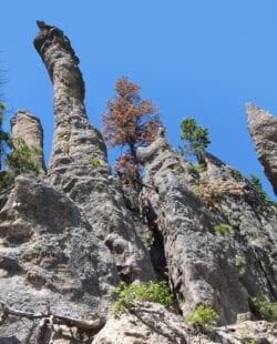 Black Hills, Custer State Park