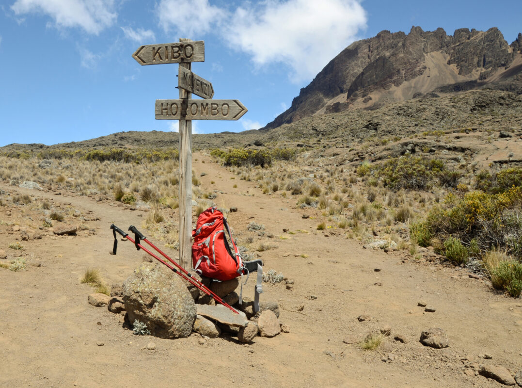 Рointer, backpack and sticks at the route to Mawenzi